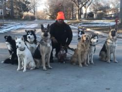 AMO Pet Care